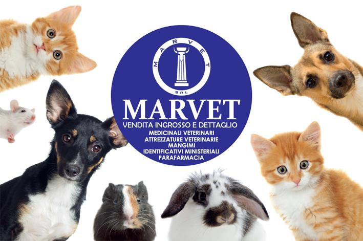 Marvet bannerquadro 20210511114717